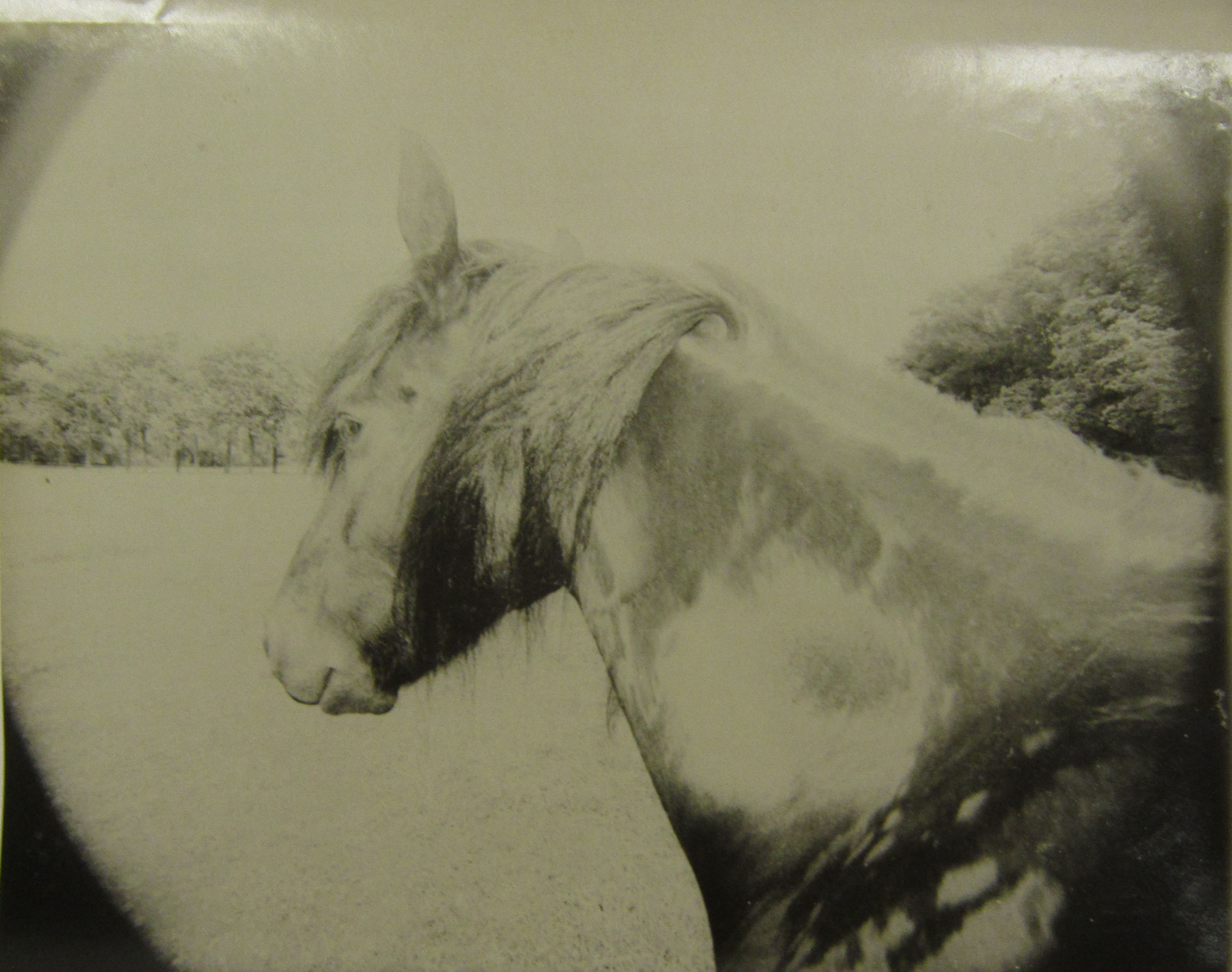 Horsemane